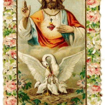 Simbologia cristiana: il pellicano.