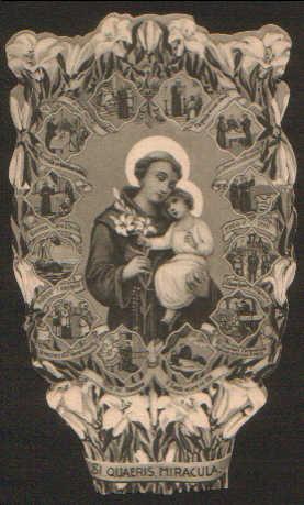 Il giglio benedetto di S. Antonio di Padova